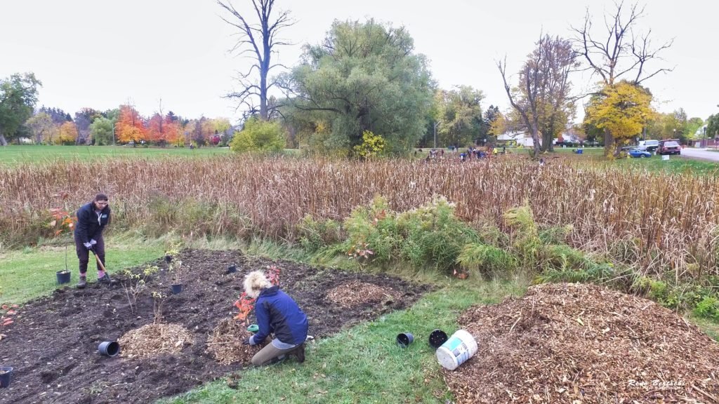 Friends of One Mile Creek tree planting at King and John St. Niagara on the Lake Oct 24 2020