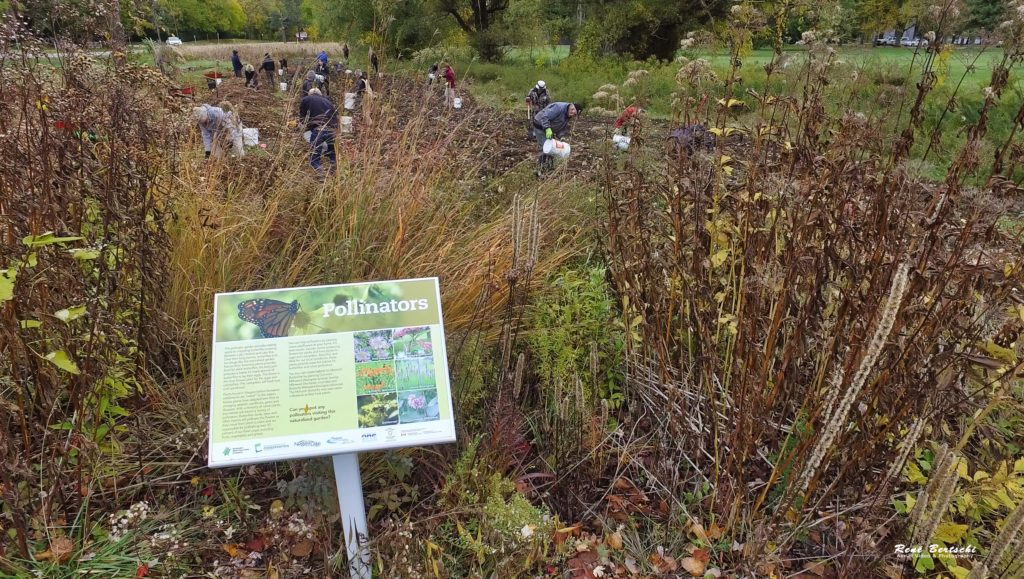 View through pollinator garden (planted in 2016) of the 2020 tree planting of extended area along One Mile Creek