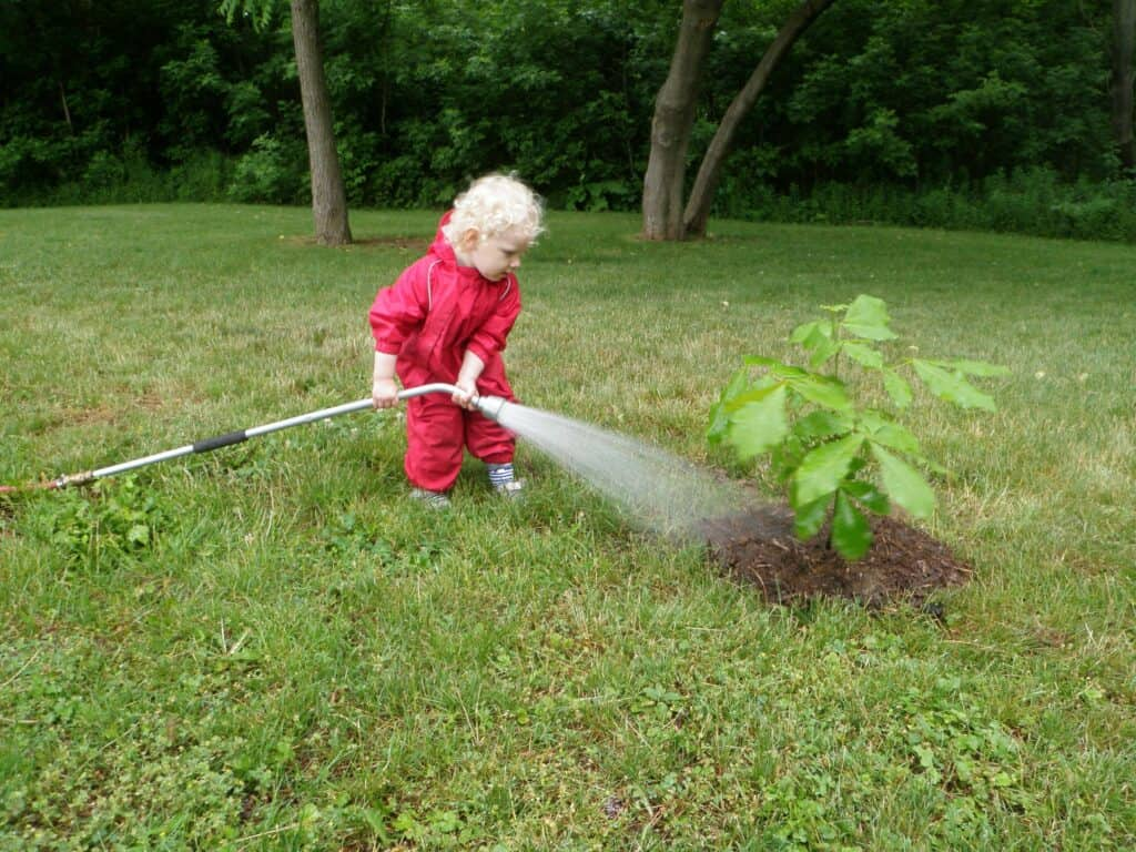 William Street new tree being watered by young volunteer in 2012.