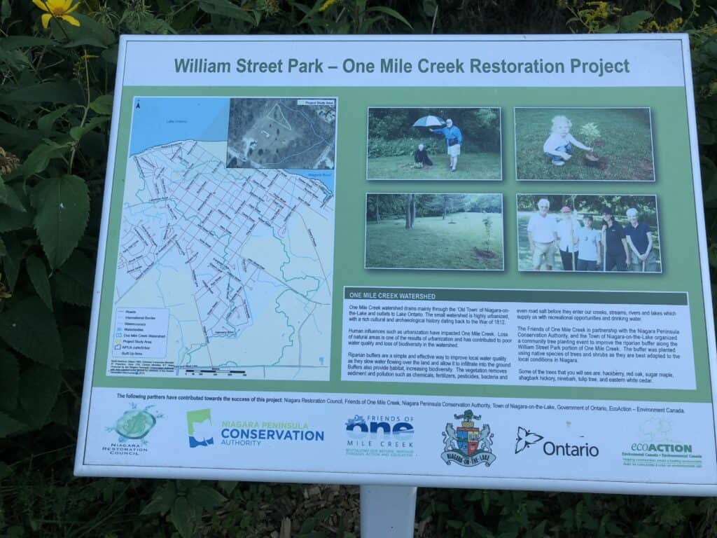 William Street Park interpretive sign shows volunteers in 2012 and explains how natural buffers improve water quality and promote biodiversity.