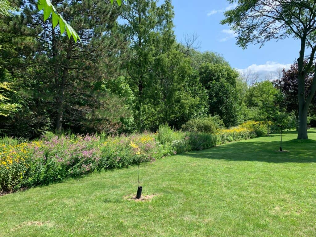The William Street pollinator garden planted in 2012 stretches for 30 metres (100 feet) as a buffer to the grass.