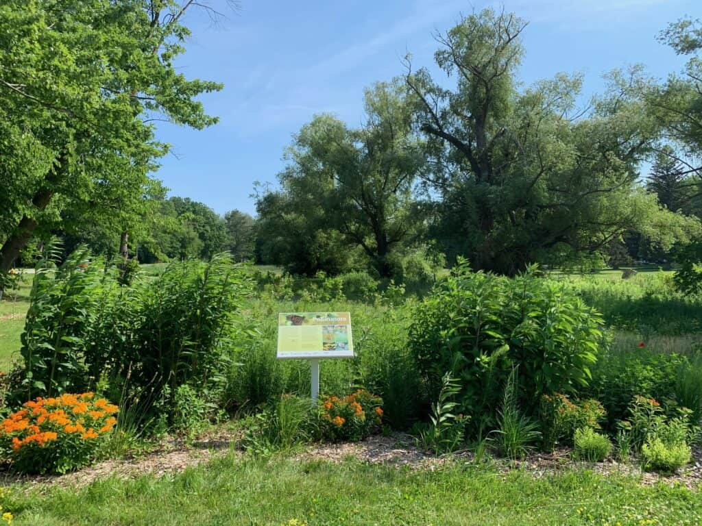 FOMC pollinator garden King and John in June 2021 by Katleya Young-Chin MG_4768