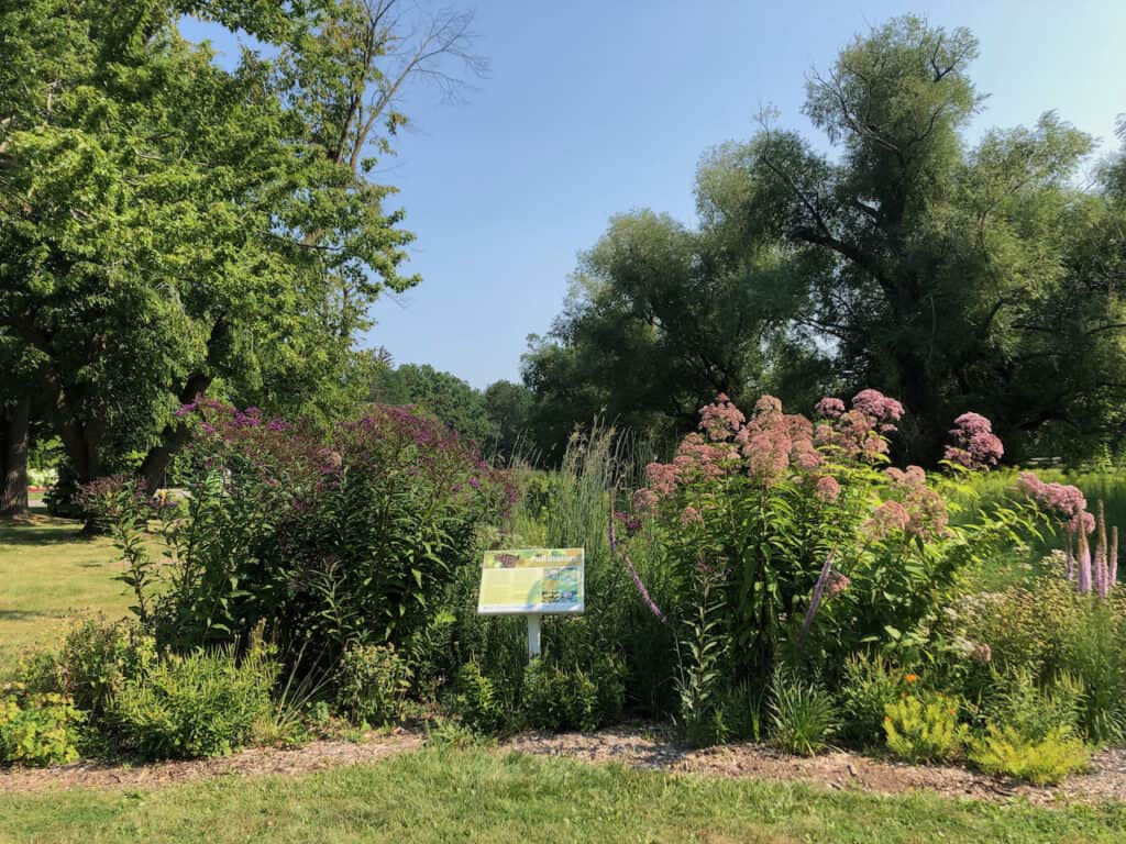 FOMC pollinator garden King and John in August 2021 by Klara Young-Chin